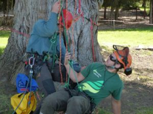 Aerial Rescue Training for Arborist and Tree Climbers