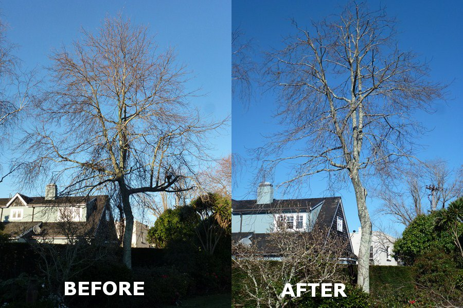 Contract Climbing Tree Pruning