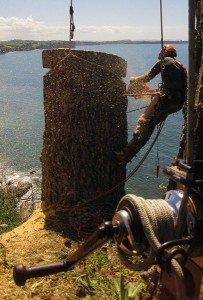tree rigging training