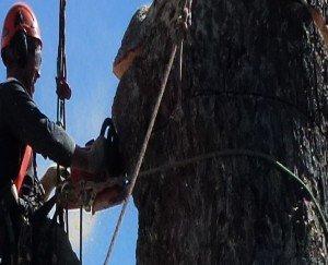 Tree Rigging for Arborist
